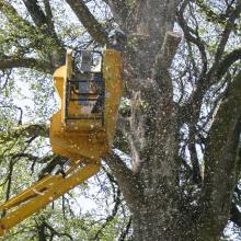 Tree Worker on a MEWP